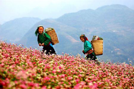Tour du lịch Hà Giang giá rẻ từ Haidang Travel